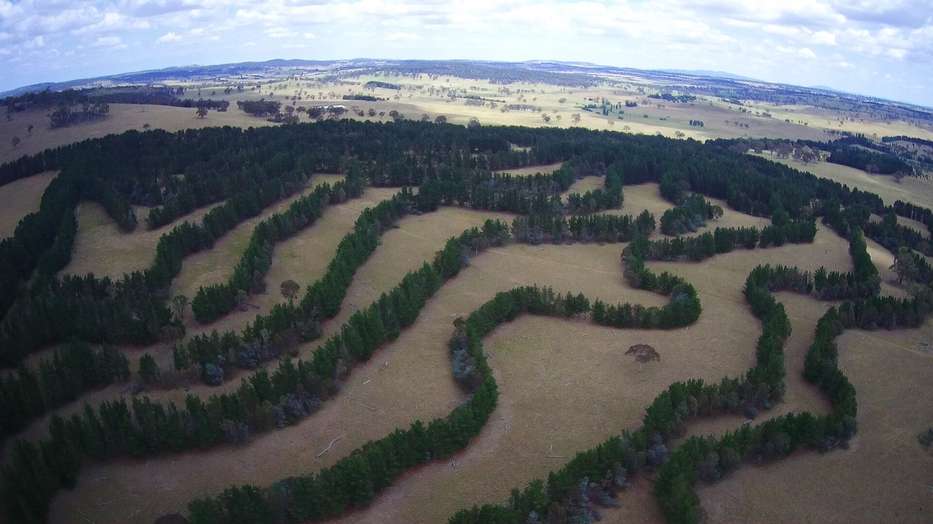 Agroforestry_contour_planting