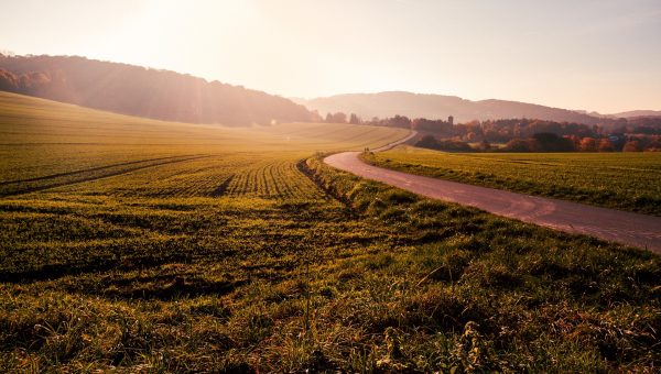 field-1246620_1920